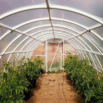 Szklarnia - domowe pomidory