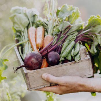 Własne wyroby z gospodarstwa rolnego